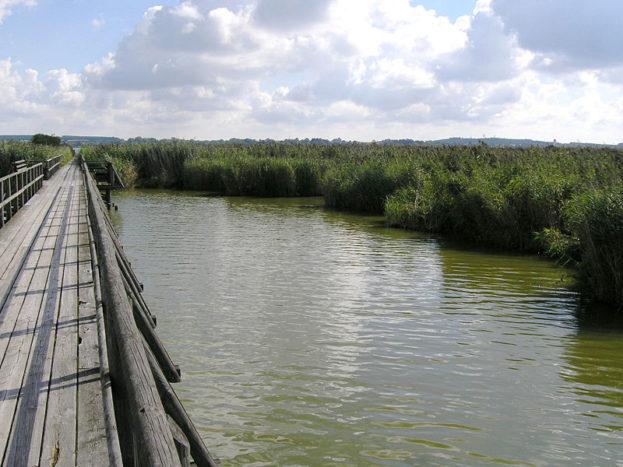 Steg-über-den-Federsee-in-bad-buchau
