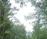 bäume im moor - wurzacher ried