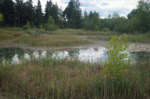 wurzacher ried hochmoor naturschutzgebiet