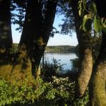 blick auf badesee metzisweiler weiher