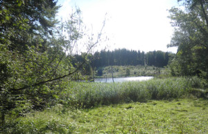 wasserschutzgebiet und wanderziel altdorfer wald