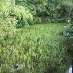 schloss graben bad waldsee