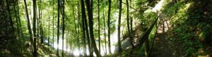 panoramabild wanderweg eistobel isny