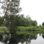 Aussicht auf Pfrunger-Burgweiler Ried Wilhelmsdorf