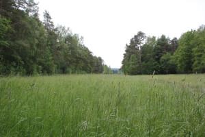 Riedwiese Pfrunger-Burgweiler Ried Wilhelmsdorf