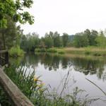Steg des Riedlehrpfads im Pfrunger-Burgweiler Ried Wilhelmsdorf
