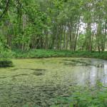 Torfteich im Pfrunger-Burgweiler Ried Wilhelmsdorf