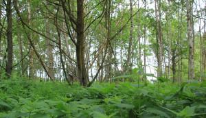 Wald im Pfrunger-Burgweiler Ried Wilhelmsdorf