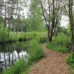 Weg im Pfrunger-Burgweiler Ried Wilhelmsdorf
