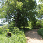 wackelwald bad buchau riedpfad