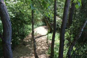 weg des wackelwalds bad buchau
