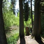 Bäume-im-wackelwald-bad-buchau