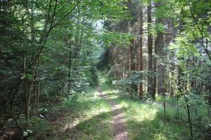 Pfad durch Steiner Ried Bad Waldsee