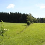 Riedwiese Bad Waldsee