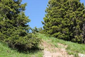 Stufen des Wanderwegs zum Gipfel Hochgrat
