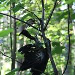 Vogelskelett im Baum Steinacher Ried