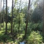 Wald Steinacher Ried Bad Waldsee