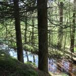 Wasser im Steinacher Ried Bad waldsee