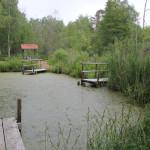 Wassertümpel-vom-Torfstechen-im-Pfrunger-Burgweiler-Ried-Wilhelmsdorf