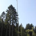 Toter Baum im Steinacher Ried- danach nach Rechts