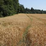 Felder am Wanderweg