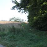 Waldrand Baindter Wald