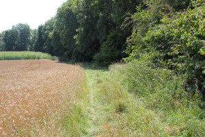 Waldrand Wanderweg