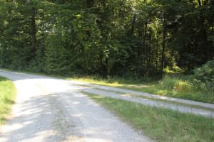 Kreuzung in den Wald