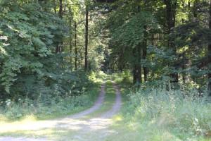 Waldweg nach Kreuzung