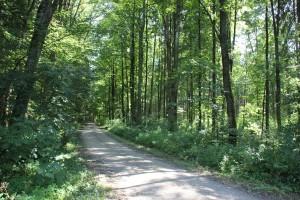 Wanderweg zum Kiebelesweiher