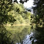 Kiebelesweiher Baindter Wald