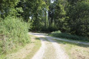Baindter Wald - bei Kreuzungen gerade aus