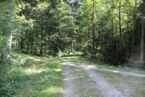 Kreuzungen des Waldwegs Baindter Wald