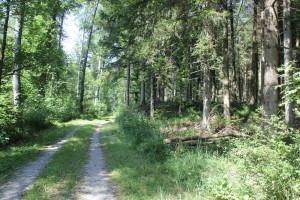 Wanderweg im Baindter Wald