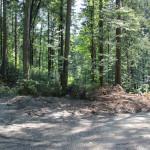 Verkehrsinsel im Wald - links halten