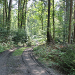 Wanderweg im Wald nach Verkehrsinsel
