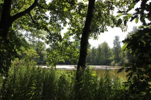 Schwanzwiesweiher Wald-Weiher-Wanderweg Baindter Wald Nord