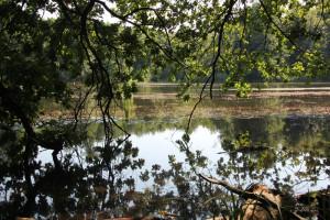 Ausblick zur Pause am linken Ufer des Schwanzwiesweiher