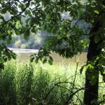 Schwanzwiesweiher Baindter Wald