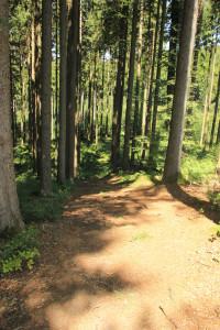 Abfahrt mit gefährlichen Wurzeln Tannenbühl Bad Waldsee