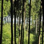 Ausblick auf dem Waldlehrpfad Tannenbühl