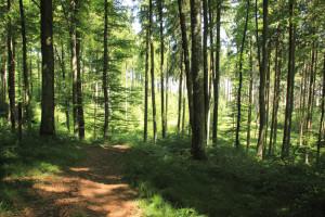 Ausblick vom Waldlehrpfad Tannenbühl