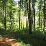 Ausblick-vom-Waldlehrpfad-Tannenbühl