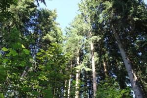 Bäume-des-Rieds-in-Bad-waldsee