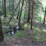 Bäume-im-Steinacher-Ried