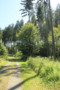Befestigter Wanderweg -Ende des Waldlehrpfads Bad Waldsee