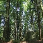 Findling an höchster Stelle des Waldlehrpfads Tannenbühl