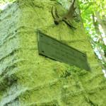 Gedenktafel Archäologische Funde Schussenursprung Bad Schussenried
