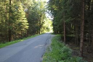 Geteerte-Straße-durchs-Steinacher-Ried