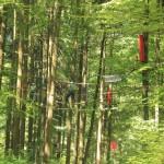 Kletterer-auf-dem-Abenteuerkletterpark-Tannenbühl-Bad-Waldsee
